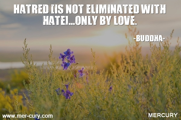 13.hatred-is-not-eliminated-with-hateonly-by-lov