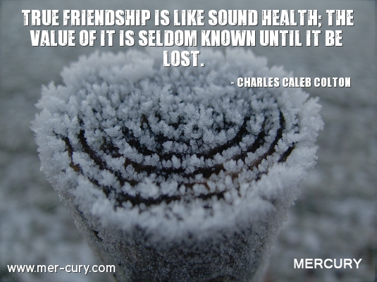 Quote About True Friendship Adorable 20 Friendship Quotes To Help You Appreciate True Friendship